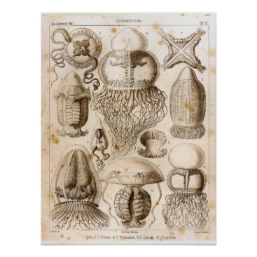 Beach Themed Ernst Haeckel SeaLife Ocean Jellyfish Art Print
