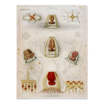 Beach Themed Ernst Haeckel SeaLife Ocean Jellyfish Print