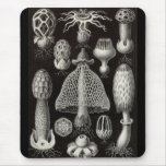 Ernst Haeckel - setas de Basimycetes Tapetes De Ratón