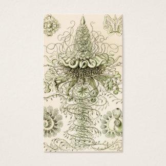 Ernst Haeckel Siphonophorae Business Card