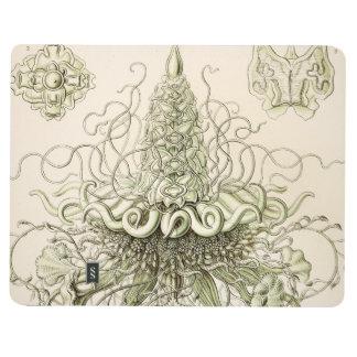 Ernst Haeckel Siphonophorae Cuaderno