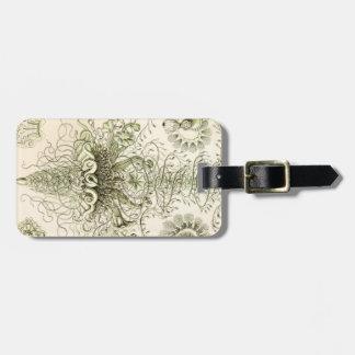 Ernst Haeckel Siphonophorae Luggage Tag