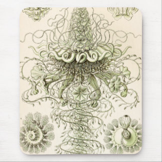 Ernst Haeckel Siphonophorae Mouse Pad