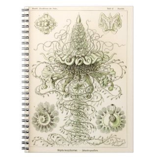 Ernst Haeckel Siphonophorae Spiral Note Books