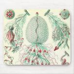 Ernst Haeckel - Siphonphorae4 Detail Mouse Mat