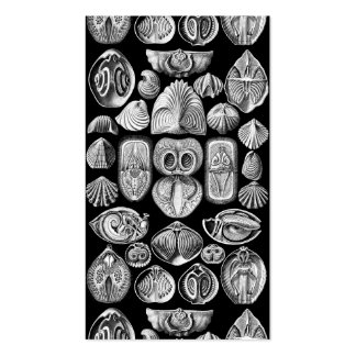 Ernst Haeckel Spirobranchia Business Card