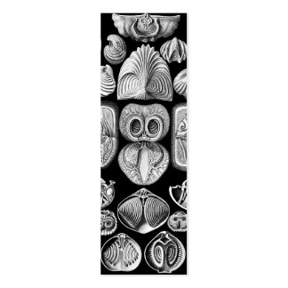Ernst Haeckel Spirobranchia Mini Business Card