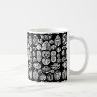 Ernst Haeckel Spirobranchia Taza De Café