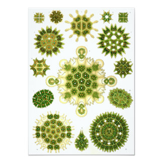 ernst haeckel spores 4.5x6.25 paper invitation card