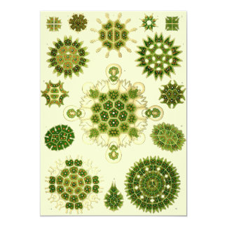 ernst haeckel spores 5x7 paper invitation card