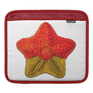 Ernst Haeckel Starfish Ipad sleeve
