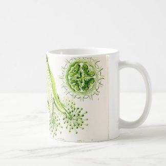Ernst Haeckel Stauromedusae Stalked Jellyfishes Coffee Mug