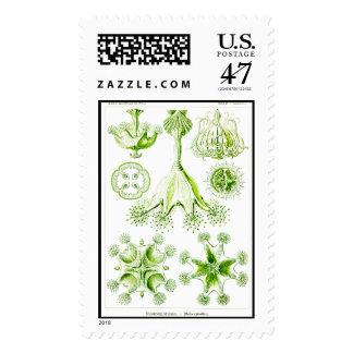 Ernst Haeckel Stauromedusae Stalked Jellyfishes Stamp