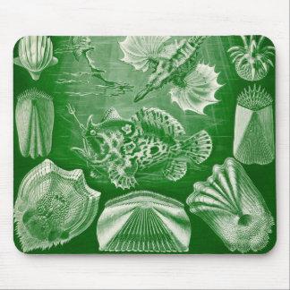 Ernst Haeckel - Teleostei Detail2 Mouse Pad
