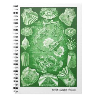 Ernst Haeckel Teleostei Notebook