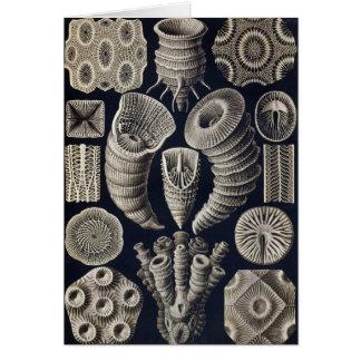 Ernst Haeckel - Tetracoralla Card