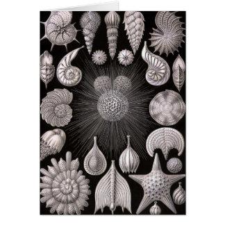 Ernst Haeckel - Thalamophora Card
