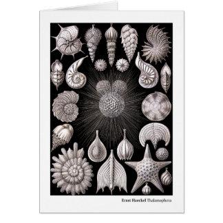 Ernst Haeckel Thalamophora I Card