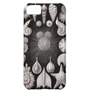 Ernst Haeckel Thalamophora I Cover For iPhone 5C