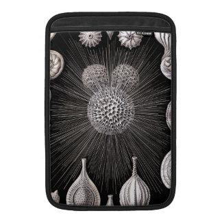 Ernst Haeckel Thalamophora I MacBook Sleeve