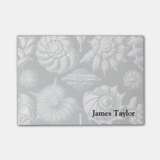 Ernst Haeckel Thalamophora II Post-it Notes