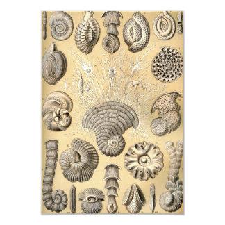 Ernst Haeckel Thalamophora shells Card