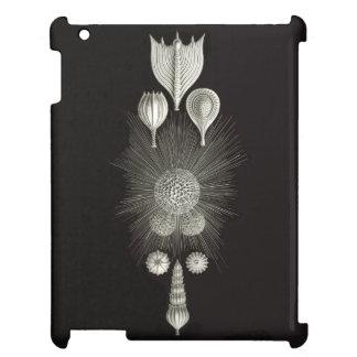 ERNST HAECKEL: Thalamphora Glossy iPad Case