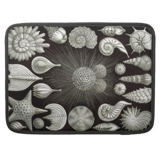 Ernst Haeckel Thalamphora MacBook Pro Sleeve
