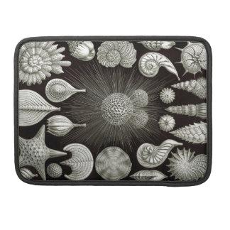Ernst Haeckel Thalamphora Sleeve For MacBook Pro