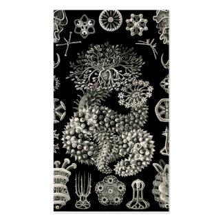 Ernst Haeckel Thuroidea Sea Cucumbers Business Card
