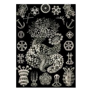 Ernst Haeckel Thuroidea Sea Cucumbers Large Business Card
