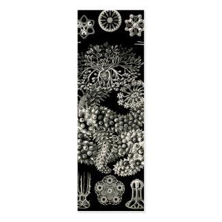 Ernst Haeckel Thuroidea Sea Cucumbers Mini Business Card