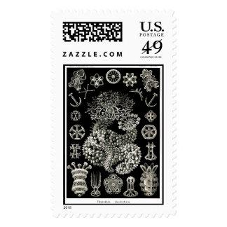 Ernst Haeckel Thuroidea Sea Cucumbers Stamp