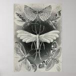 Ernst Haeckel - Tineida Poster