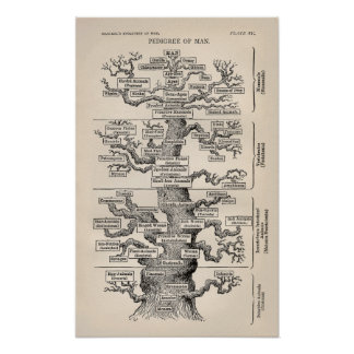 Ernst Haeckel Tree of Life Pedigree of Man Evoluti Poster