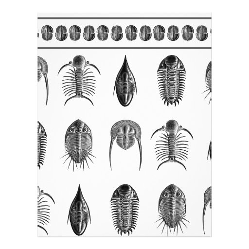 Ernst Haeckel Trilobite Pattern - large Letterhead