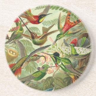Ernst Haeckel Trochilidae Hummingbird Coaster