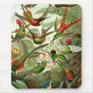 Ernst Haeckel Trochilidae Hummingbird Mouse Pad