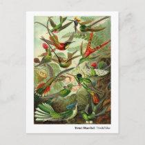 Ernst Haeckel Trochilidae Hummingbirds New Address Announcement Postcard