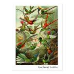 Ernst Haeckel Trochilidae Hummingbirds New Address Postcard