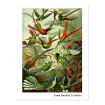 Ernst Haeckel Trochilidae Hummingbirds New Address Postcard