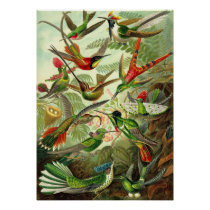 Ernst Haeckel - Trochilidae Hummingbirds Poster