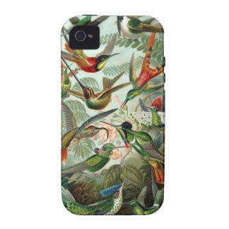 Ernst Haeckel - Trochilidae iPhone 4/4S Covers