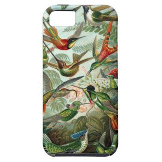 Ernst Haeckel - Trochilidae iPhone 5 Cases