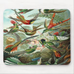 Ernst Haeckel - Trochilidae Mouse Pad