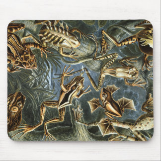 Ernst Haeckel variety of exotic frogs:Batrachia Mouse Pad