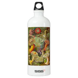 Ernst Haeckel's Actinae Ocean Life Aluminum Water Bottle