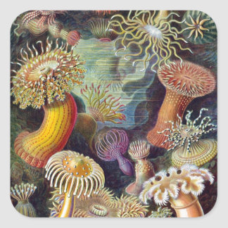 Ernst Haeckel's Actiniae Square Sticker