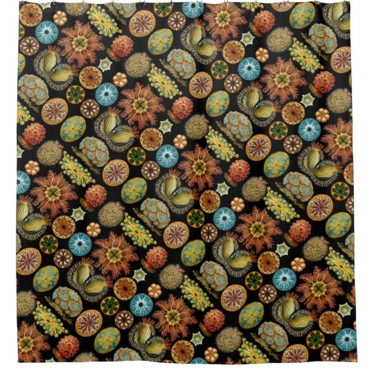 Ernst Haeckel\'s Ascidiae Ocean Life Shower Curtain   Zazzle.com