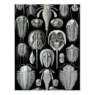 Ernst Haeckel's Aspidonia Postcard